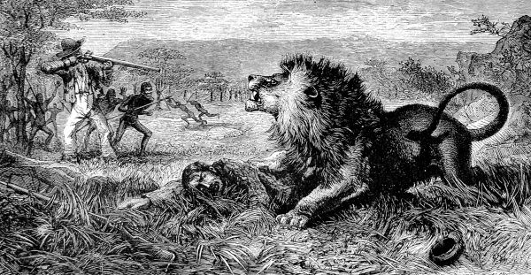 Engraving showing David Livingstone (1813-1873), the Scottish missionary and explorer, being attacked by a lion in the Mabotsa Valley, Africa, 1843