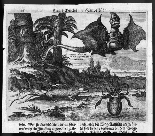 'Flying dragons' were among the weird creatures reported from the New World by Vespucci and other explorers