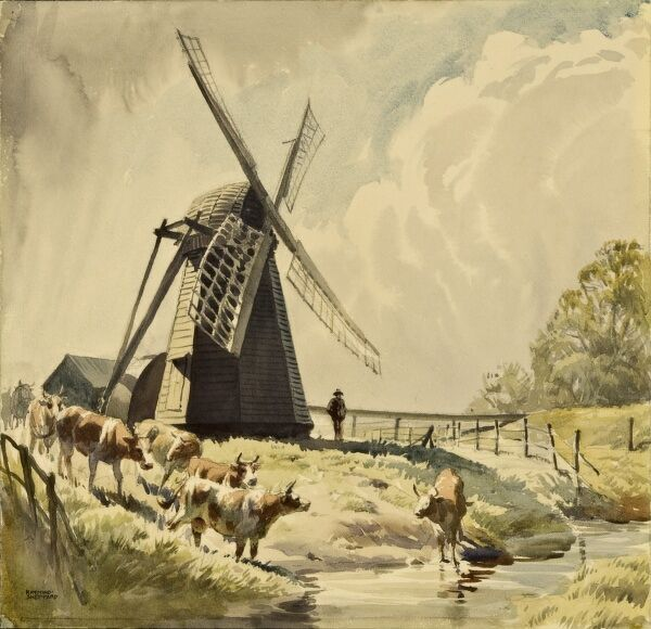 The Draining Mill, Herringfleet. Cattle come down to drink in the mill stream water. Watercolour painting by Raymond Sheppard