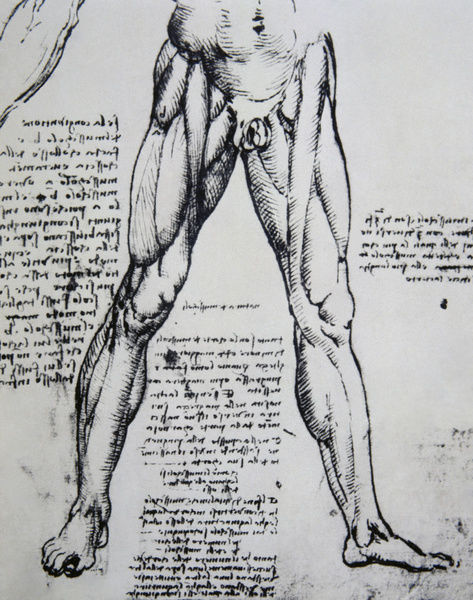 Drawing on anatomy by Leonardo da Vinci (1452-1519) The Musc ...
