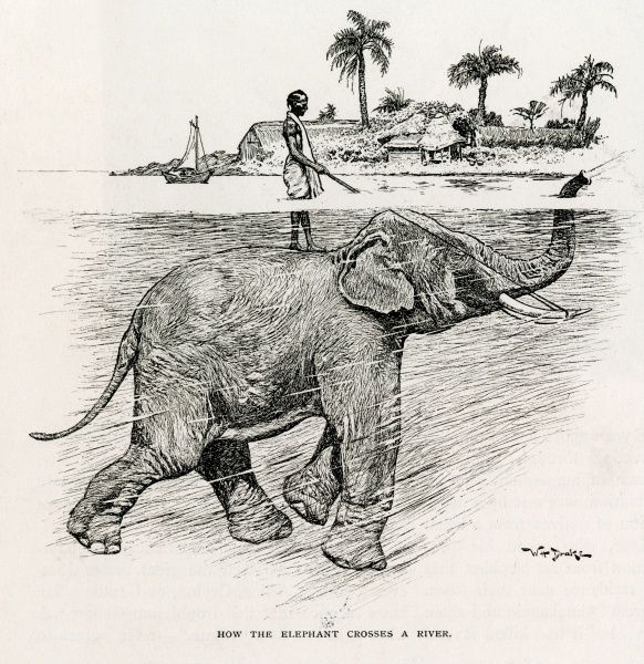 A man, somewhere in the Asian subcontinent, crosses a river standing on the back of an elephant. The man has rudimentary reins attached to the elephant's tusks, while the elephant breathes through his trunk held above the water surface
