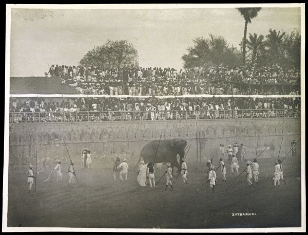 An elephant fight in Baroda