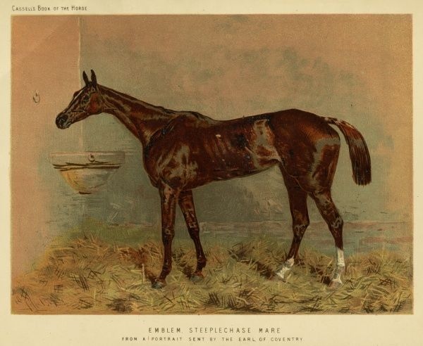 Emblem, a steeplechase mare. Date: circa 1880