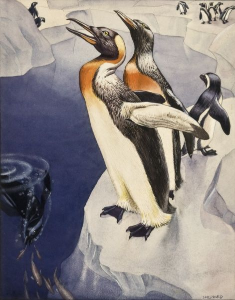 Emperor Penguins (Aptenodytes forsteri) on an Antarctic ice shelf. Stylised painting by Raymond Sheppard
