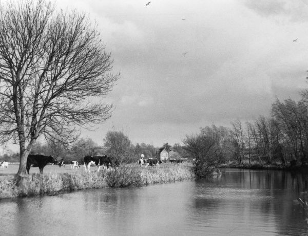 An early Spring view of the River Stour at Corfe Mullen, Dorset, England. Date: 1960s