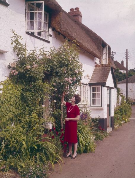 A young woman, an 'English Rose', smells her pink climbing roses outside her idyllic country cottage. Date: 1965