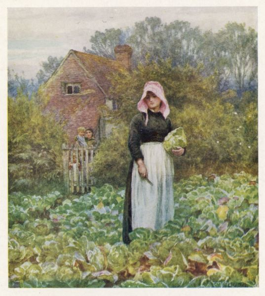 A woman cutting cabbages in her cottage kitchen garden