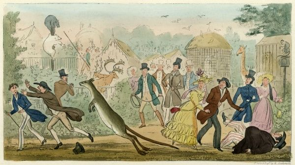 Regent's Park, London : an escaped kangaroo causes consternation at the London Zoo, which was opened two years ago. Date: 1828
