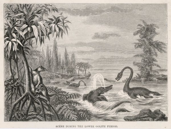 PLESIOSAUR and ICHTHYOSAUR fight it out in shallow water, watched by creatures of the land