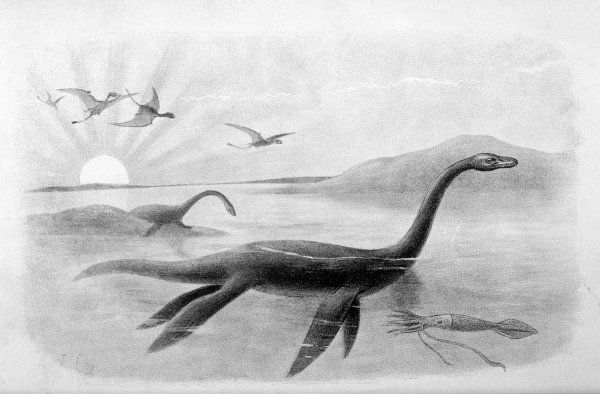 PLESIOSAURUS DOLICHODEIRUS (about 7 metres in length)
