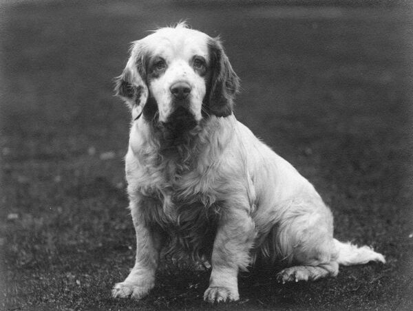 SANDRINGHAM SCION Bred by King George V. Owned by Commander E.Welman. Date: 1936