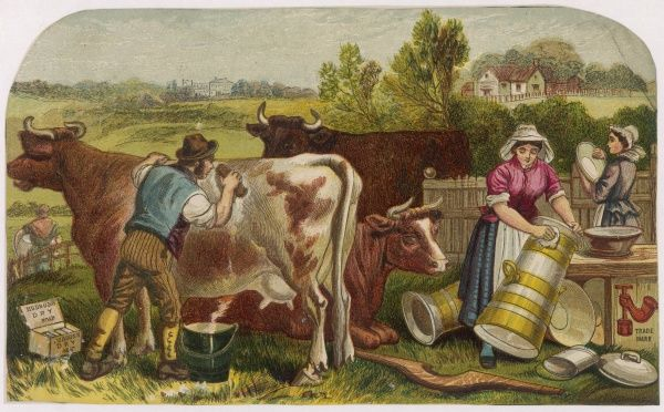 A dairy farmer scrubs down his cows using Hudson's Dry Soap while the women wash the churns & pails
