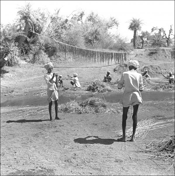 Farming activities in Madhya Pradesh Province, Central India. Photograph by Ralph Ponsonby Watts
