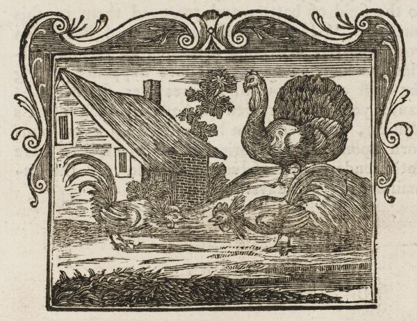 Two fighting cocks are watched by a turkey in the farmyard (illustration to the fable 'The Fighting Cocks and the Turkey')