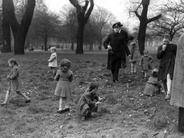 An ever vigilant park keeper in St. James's Park, London, strides up to check children who are picking all the crocus flowers just beginning to show in February 1948. 1948