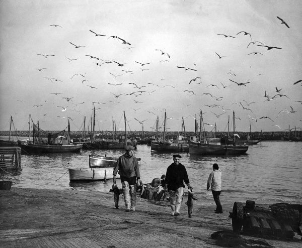 (Fishermen and boats in a harbour, with birds flying overhead.  circa 1940s