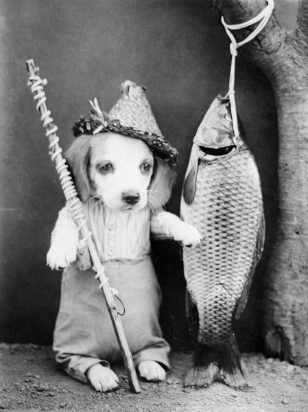 A fishing dog with a large catch! Date: early 1930s