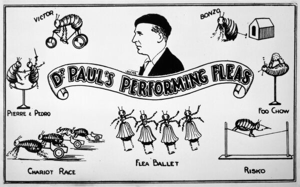 An advert for Doctor Paul's Performing Fleas