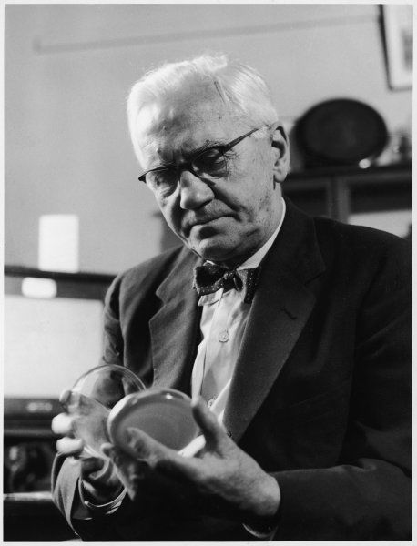 SIR ALEXANDER FLEMING Scottish bacteriologist at work in his laboratory