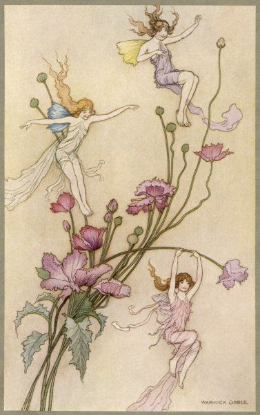 Fairies and flowers