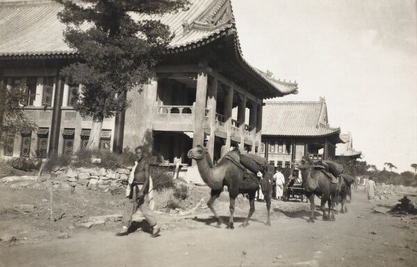 'Foreign' style house in Beijing, China. A camel caravan passes by