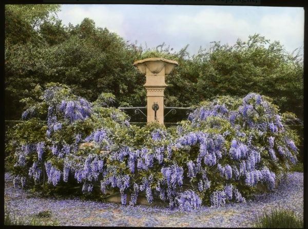 View of a fountain in the garden at Paddockhurst, near Selsfield Common, West Sussex. The house dates from the 17th century, and is now used as a school. Wisteria (a flowering plant of the Fabaceae family) is growing all the way around it