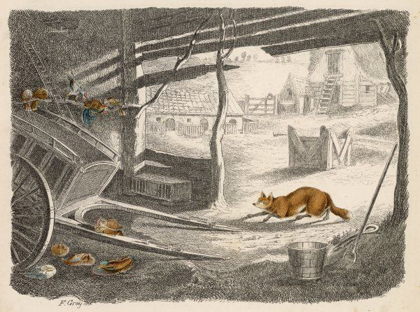 A wily fox creeps into a farmyard, with evil intent