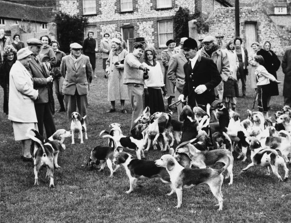Gentry and beagle hounds meet on the village green at the start of a fox hunt. Date: 1960s