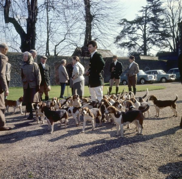 Landed gentry and a pack of beagle dogs gather at a meet before a fox hunt in Surrey, England