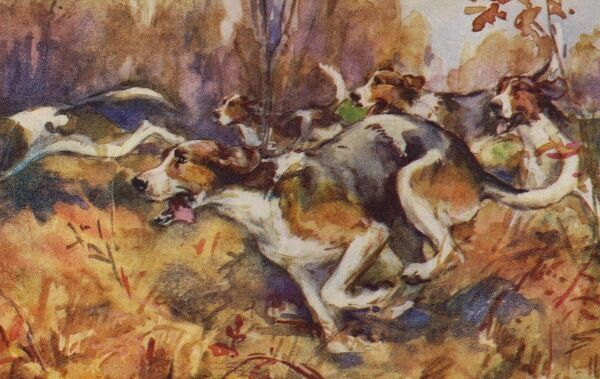 Foxhounds. Artist: Eileen Hood. Watercolour of foxhound dogs scenting their quarry in a woodland scene Date: circa 1915