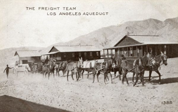 The freight team, Los Angeles Aqueduct. Ten and twelve mule teams convey supplies from Division Siding to the tunnel camps up in the mountains