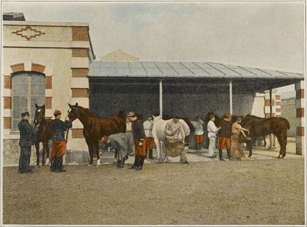 French cavalry horses are periodically examined by the veterinaire
