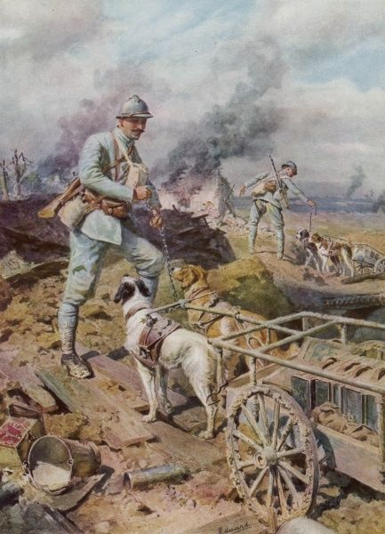 During World War One the French army uses dogs to haul supplies to troops in the front line