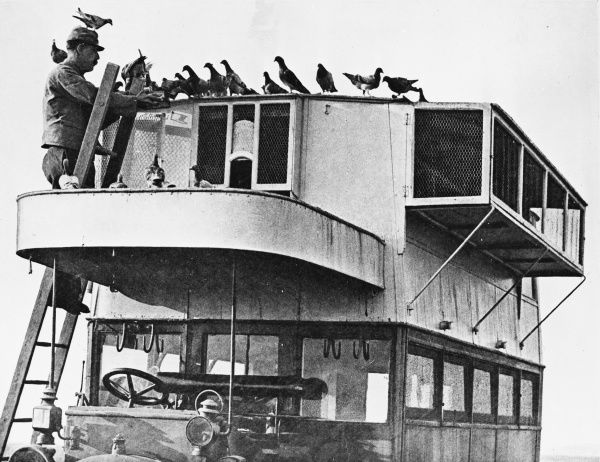 French communications via carrier pigeons during World War I