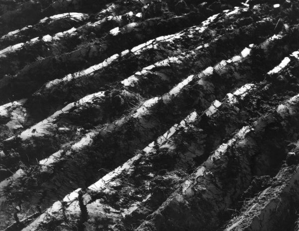 A close-up photograph of freshly turned furrows. Date: 1960s
