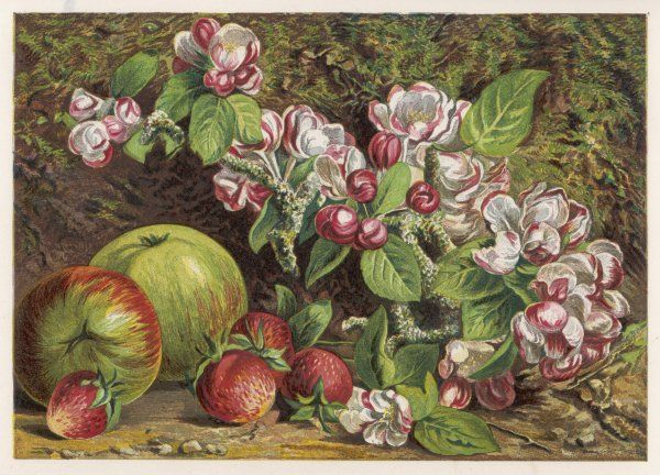 Apples and strawberries with blossom, to represent the months of May and June