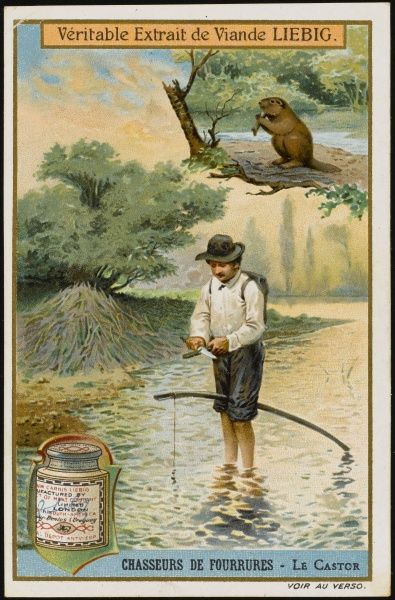 Hunting beaver for their skins in North America