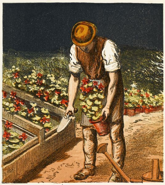 A Victorian gardener in the midst of potting duties