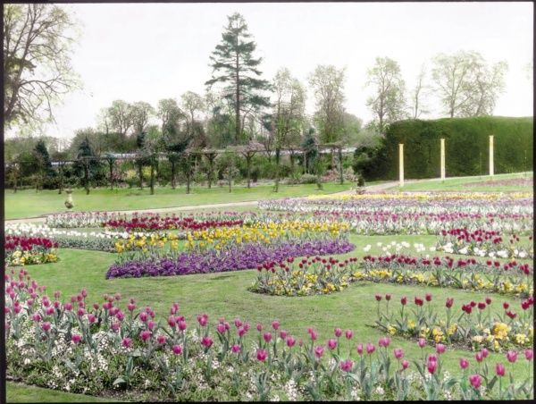 View of gardens at the village of Tewin, near Welwyn Garden City, Hertfordshire, showing many shades of tulips growing in an open, grassy area