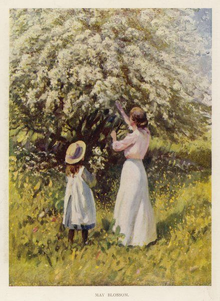 An Edwardian lady and little girl, probably mother and daughter, gather May blossom (Hawthorn) together