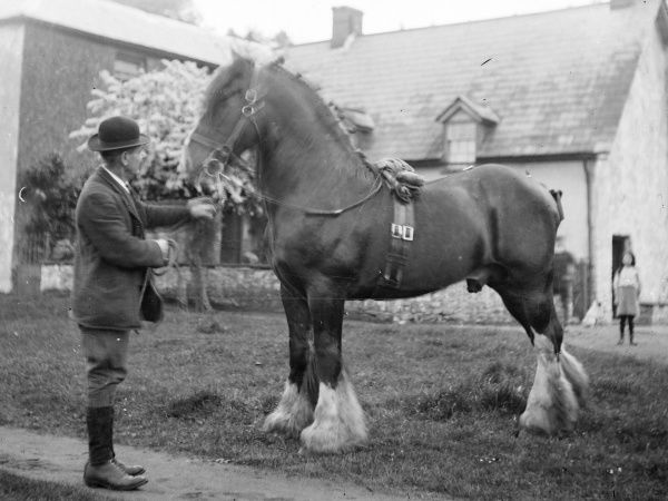 A gentleman holding the reins of a shire horse in front of a house, probably somewhere in Mid Wales. A little girl watches from a distance