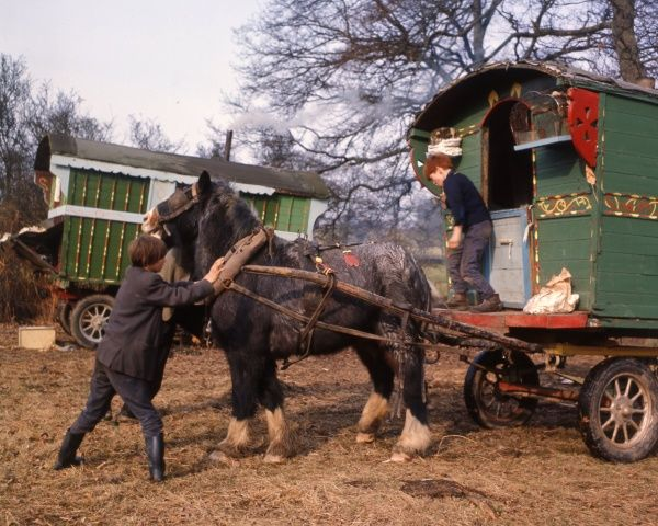 Gipsy boys with their horse-drawn caravan at an encampment in Surrey, getting the harness straight in preparation for moving off