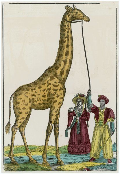 Zarafa, a giraffe presented to Charles X of France by the Viceroy of Egypt, and housed in the jardin d'acclimatation, Paris