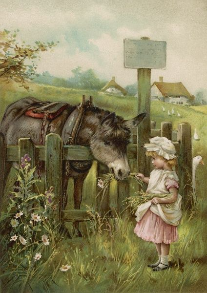 A little girl feeds flowers to a donkey over a fence
