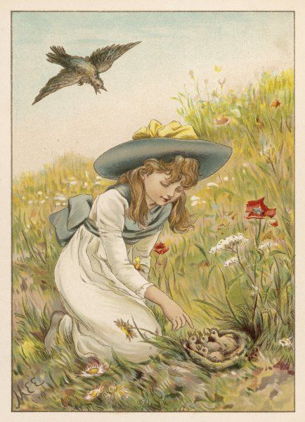 A little girl has found a nest of chicks in a meadow: the mother bird hovers anxiously above her
