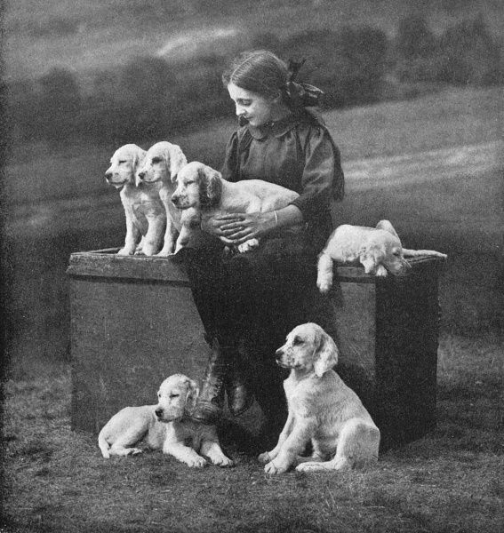 A Scottish girl sits on a box with six Setter puppies Date: 20th century