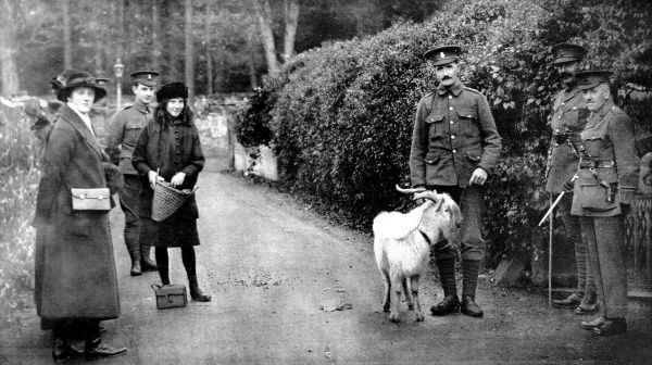 The goat presented by King George V to the 7th Royal Welsh Fusiliers
