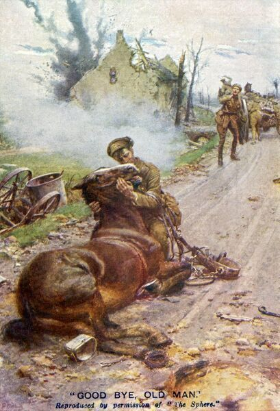 Goodbye Old Man Soldier And Dying Horse During Wwi