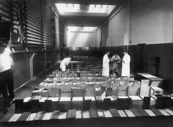 Grading butter for export at the State Cold Stores, Hamilton