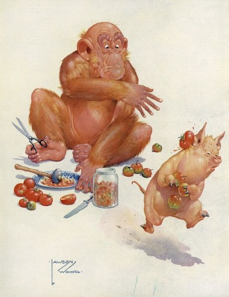 Humorous illustration by Lawson Wood showing Granpop (Lawson Wood's wily orang-utan) throwing tomatoes at a thieving pig. Date: 1934
